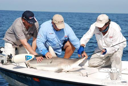 Shark onboat