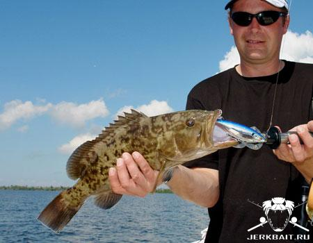 Stick Shadd Grouper