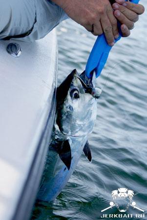 Tuna onboat